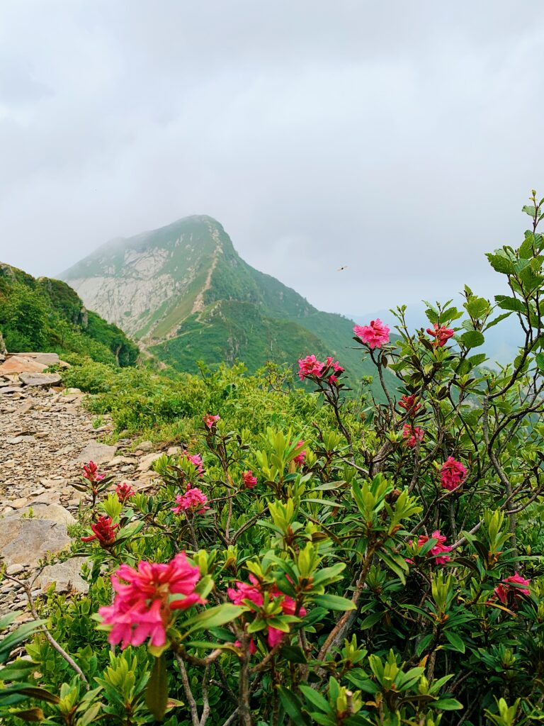 Kurhaus-Cademario-Naturelly-Michaela-Summer-Yoga9-768x1024 Wellness & Hiking - Find your equilibrium at Kurhaus Cademario