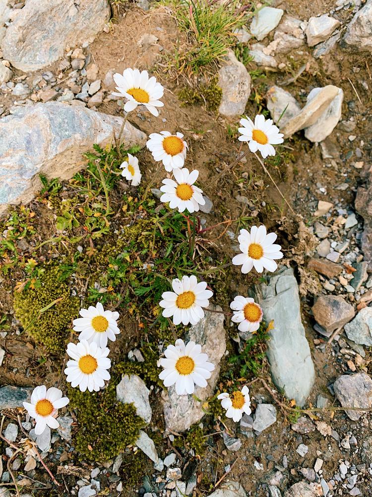 LAAX-Sommer-Wandern-Naturellymichaela_1-7 Sommer in Graubünden – Natur, Abenteuer & Greenstyle in der schönsten Bergregion