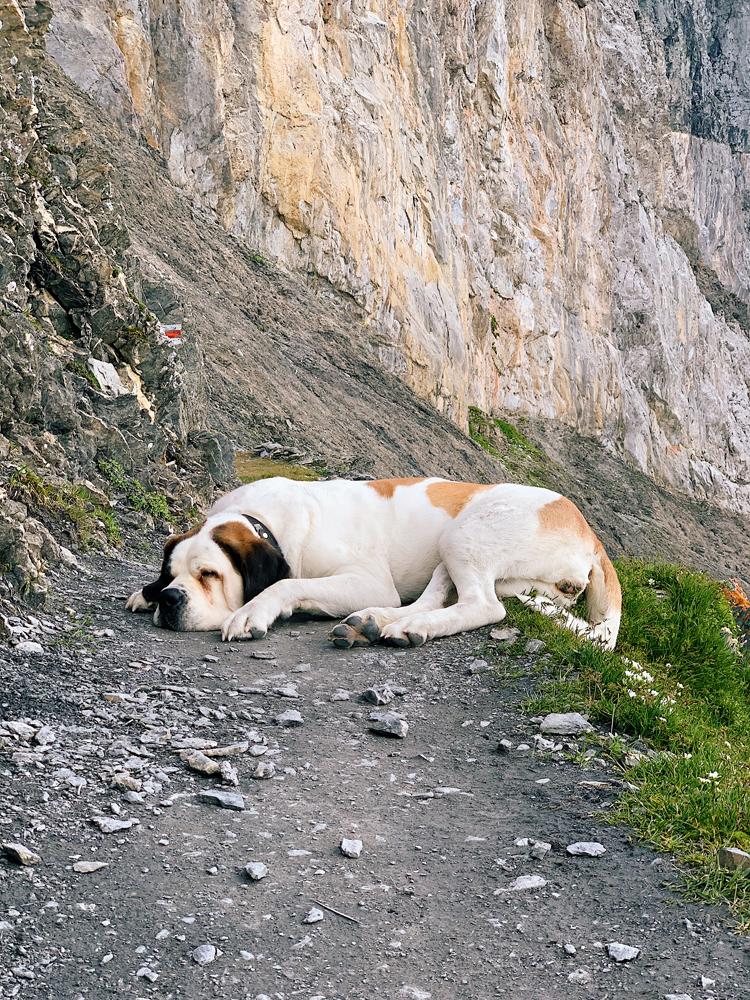 LAAX-Sommer-Wandern-Naturellymichaela_5 Sommer in Graubünden – Natur, Abenteuer & Greenstyle in der schönsten Bergregion
