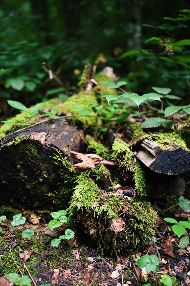 Shinrin-Yoku-JNTO-x-naturellymichaela-Swiss-lifestyle-blog-17 Shinrin-Yoku - A mindful Japan experience in Switzerland